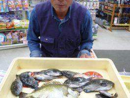 【紀州釣りで大型アイゴ!】田ノ浦釣果