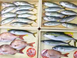 紀北沖魚種色々♪