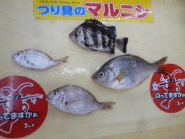 青岸の釣果!