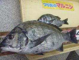 【水軒】チヌ41.5cm!!