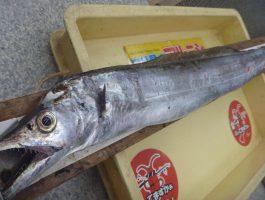 水軒の太刀魚