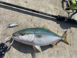 市内~海南でルアーゲームで色々釣れました!