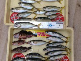 【つり日記帳】由良海釣り公園でグッドサイズのアジつれています。